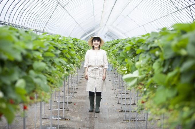 イチゴ農家 女性